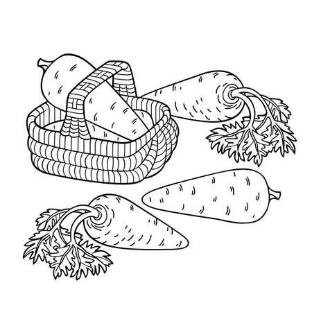 Carrots in basket. Cartoon vector illustration