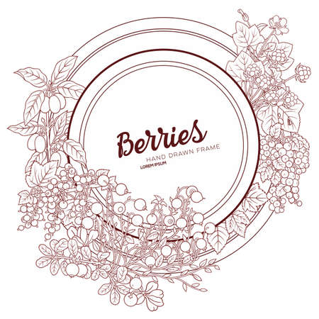 Berries and fruits hand drawn doodles illustration