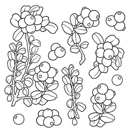 Hand drawn lingonberry . Set of objects. Vetores