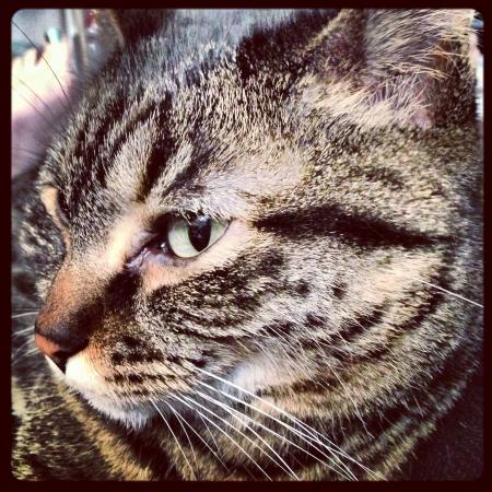 Cat close up Фото со стока