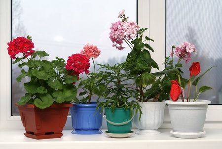 Window with flowerpots on a window sill photo