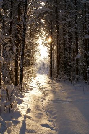 enero: Rayo de sol en invierno en el bosque oscuro