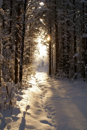 Sun beam in dark winter wood photo
