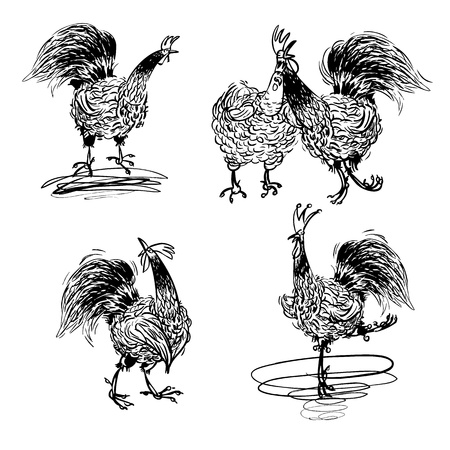 crowing: Roosters and a Hen black and white