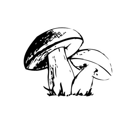 lithograph: mushrooms  hand-drawn sketch vector