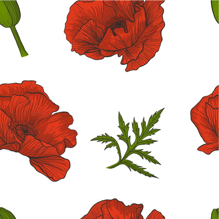 Floral seamless pattern of bright red poppies, bud and leaves on a white background vector.