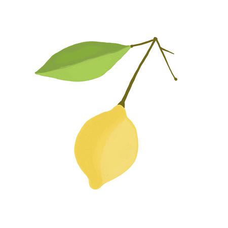 Fresh fruit lemon on a branch with a leaf vector. Illustration
