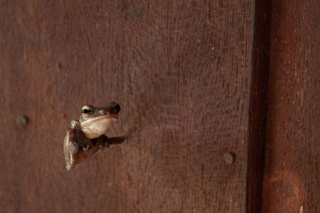 Tree frog on a nail photo