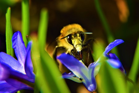bee on the flower. Big approximation Stock Photo