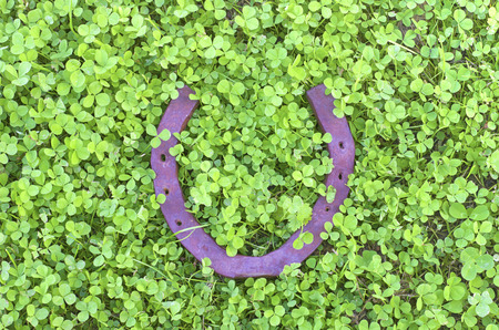 good luck charm: old rusty horseshoe lies on a field of young green clover