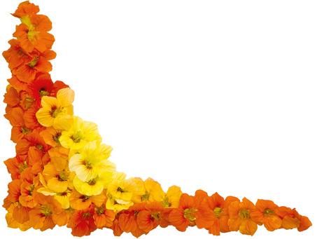 Oost-Indische kers bloemen oranje en gele kleuren op een witte achtergrond frame