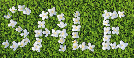 green carpet: young green carpet of clover and Jasmine flowers, the written word sale Stock Photo