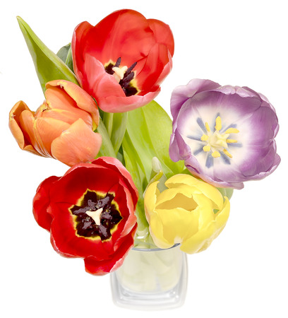 five petals: a bouquet of colorful tulips in blue glass vase isolated on white background