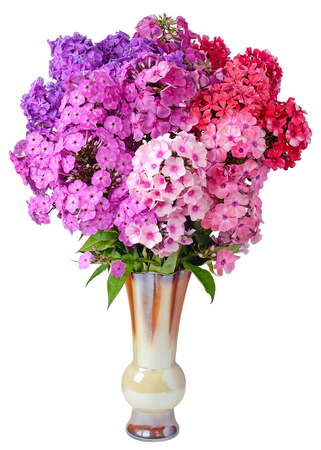 image of still life in the form of a gift of festive flower bouquet Phlox pink red lilac purple closeup in a ceramic vase isolated on a white background 版權商用圖片