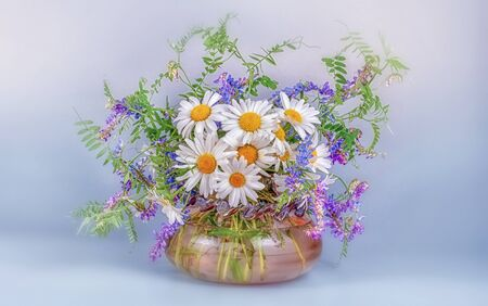 A bouquet of wild wild chamomile and mouse peas in a glass vase on a black table and a light blue background. Stockfoto