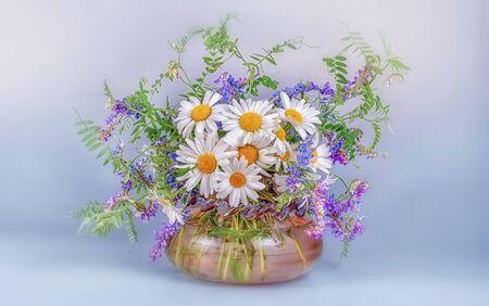 Un bouquet de camomille sauvage sauvage et de pois souris dans un vase en verre sur un tableau noir et un fond bleu clair. Banque d'images