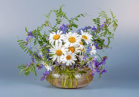 Bouquet of wild field chamomile and mouse peas in a glass vase on a black table and a light gray background. Banque d'images