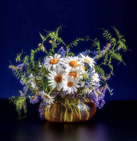 A bouquet of wild summer field flowers of chamomile and mouse peas in a glass vase on a black floor and dark purple background.