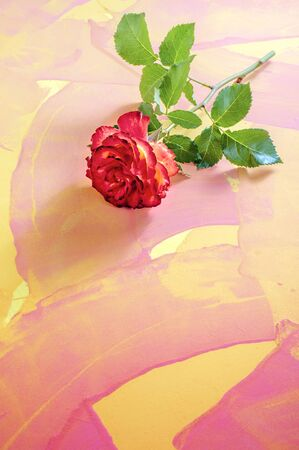 One branch of the flower Bud of a red and yellow rose lies on a table with a mottled red and yellow background.
