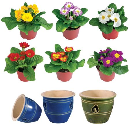 Nice flowers growing in a brown pot and empty pot isolated