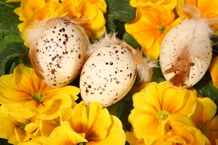 Easter colored eggs and yellow flowers on white background