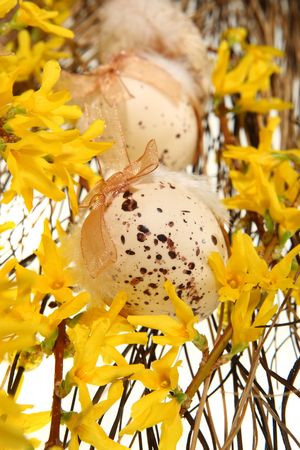 Easter eggs on forsythia branches on white Stock Photo