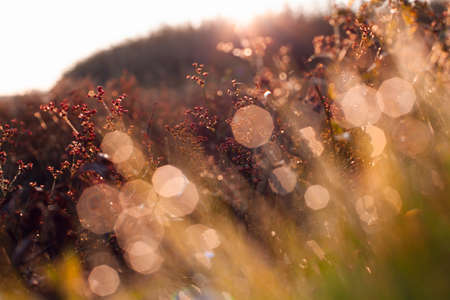 Beautiful and delicate sunrise photography. Morning dew on the grass and red berries. Delicate photo with beautiful bokeh and blur. The sun's rays pass through the dew. Place for your text. Ecology around us