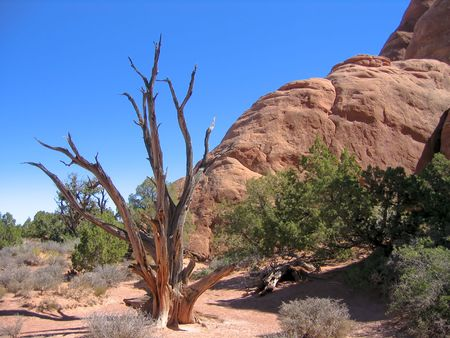 individualist: dead tree in desert with red rocks Stock Photo