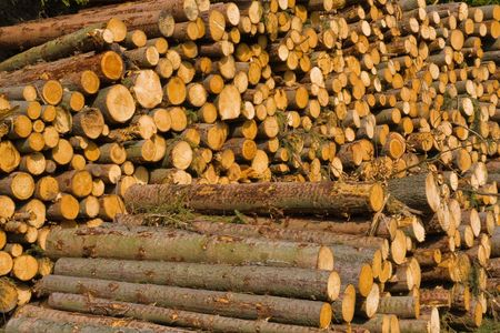 stacked timber logs ready for processing photo