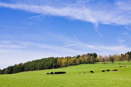 cows on pasture in beautiful landscape Stock Photo - 2951714
