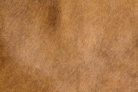 a horse fur close up photo
