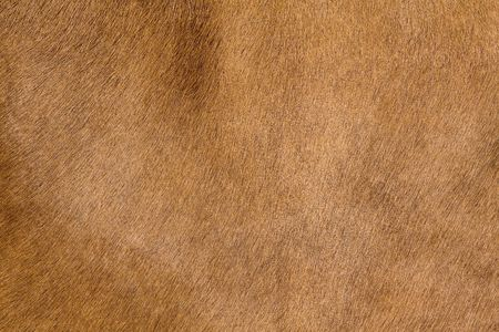 a horse fur close up photo