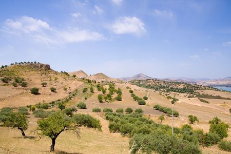 ramification: summer highland landscape in sicily