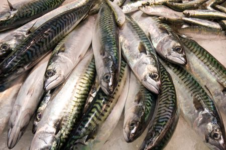 mackerel: fresh fish on the market