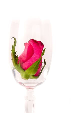 name day: rose in the wine glass on white background Stock Photo