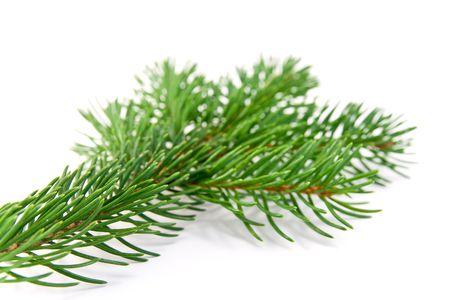 Branche abeto de Navidad decoración sobre fondo blanco