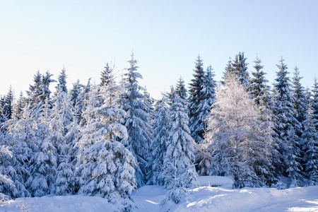 wintersport: mountains covered with fresh powder snow
