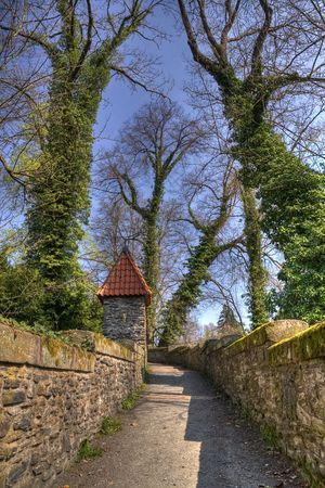 road and path through: old park in the springtime