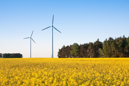 windmill  farm in the rape field during springtime photo