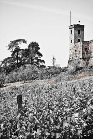 lucca: example of italian historic architecture