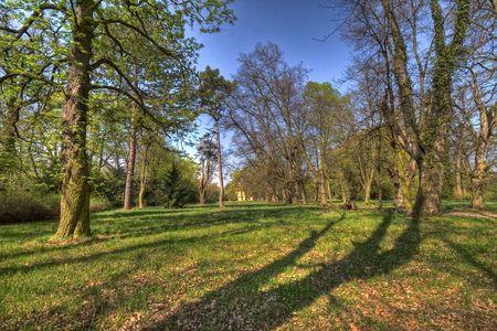 old park in the springtime photo