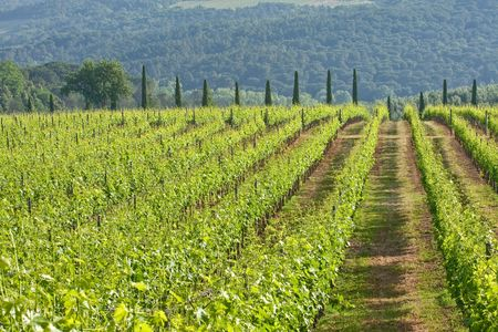 typical landscape in Italian region Tuscany photo
