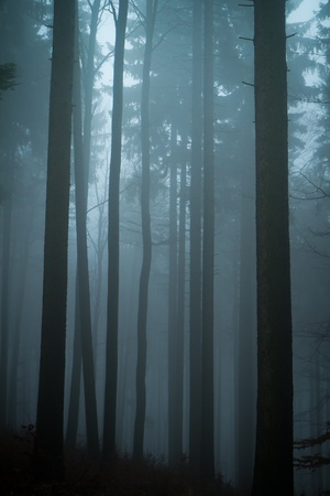 misty forest at dawn in the autumn photo