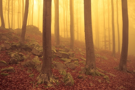 misty forest at dawn in the autumn Stock Photo - 8349910