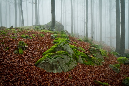 misty forest at dawn in the autumn Stock Photo - 8350161