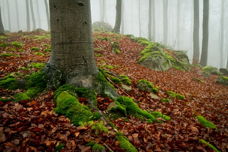 misty forest at dawn in the autumn Stock Photo - 8350173