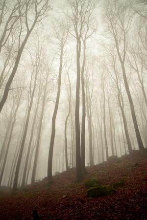 misty forest at dawn in the autumn Stock Photo - 8350032