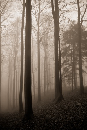 misty forest at dawn in the autumn Stock Photo - 8350037