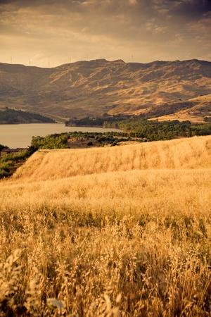 agriturismo: sicilian landscape in the summertime