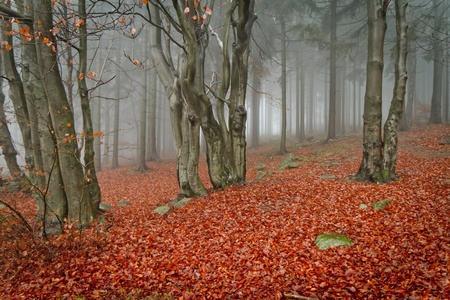 misty forest at dawn in the autumn Stock Photo - 8579943